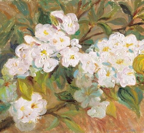 157- Primavera, Peral en flor_med